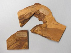 Pieces of the Charter Oak of Connecticut